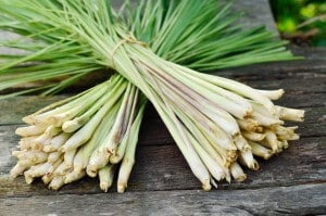 Lemongrass: The World's Most Flavorful & Beneficial Grass