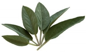 Sage: The Essential Old World Herb