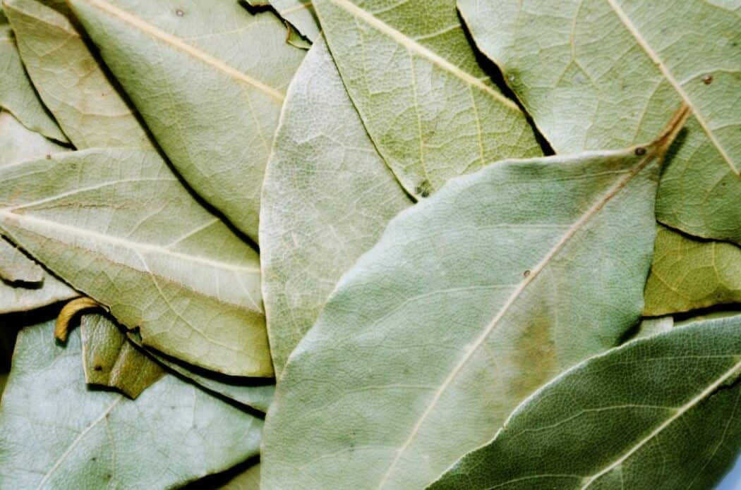 Curry Leaves Vs  Bay Leaves: SPICEography Showdown - SPICEography