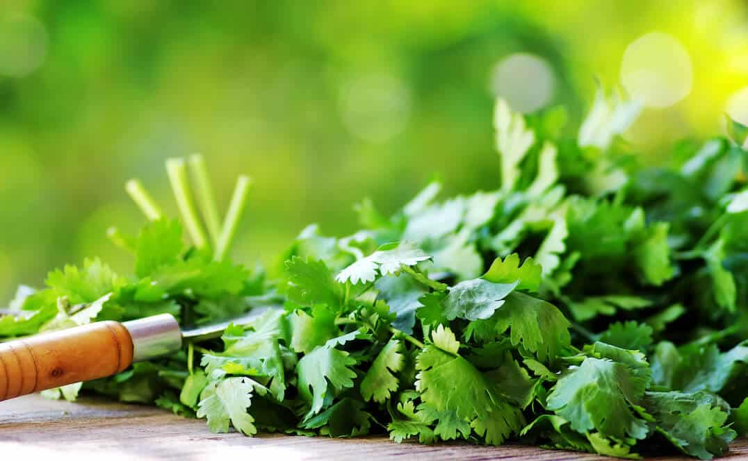 What's A Good Cilantro Substitute?