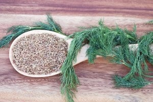 Dill Seed Vs. Dill Weed: SPICEography Showdown