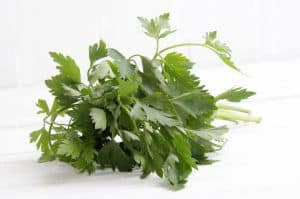 Chervil: The Fine Herb From Eastern Europe