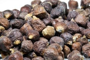 Grains Of Paradise: An African Spice With A European History