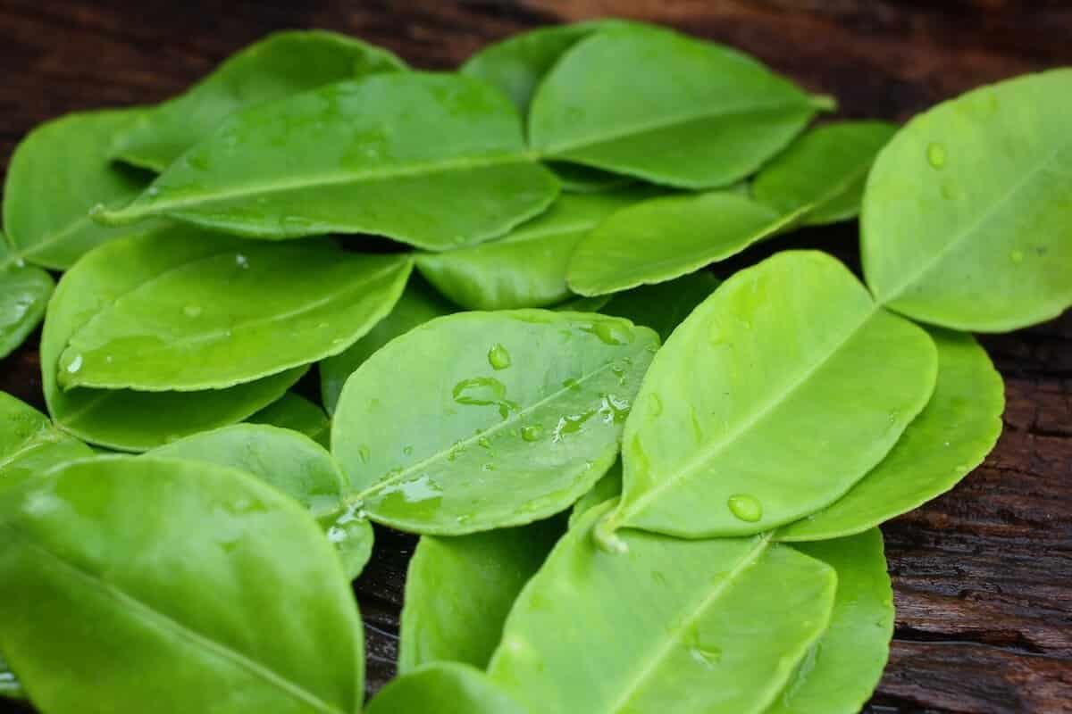Kaffir lime leaves substitute