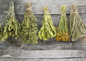 Dried Herbs Vs Fresh