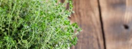What's A Good Lemon Thyme Substitute?