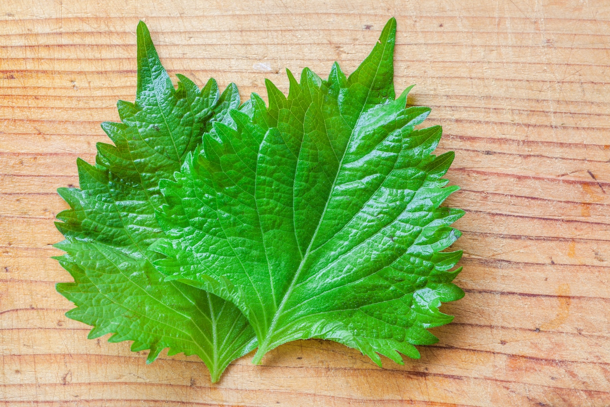 What's A Good Shiso Substitute?