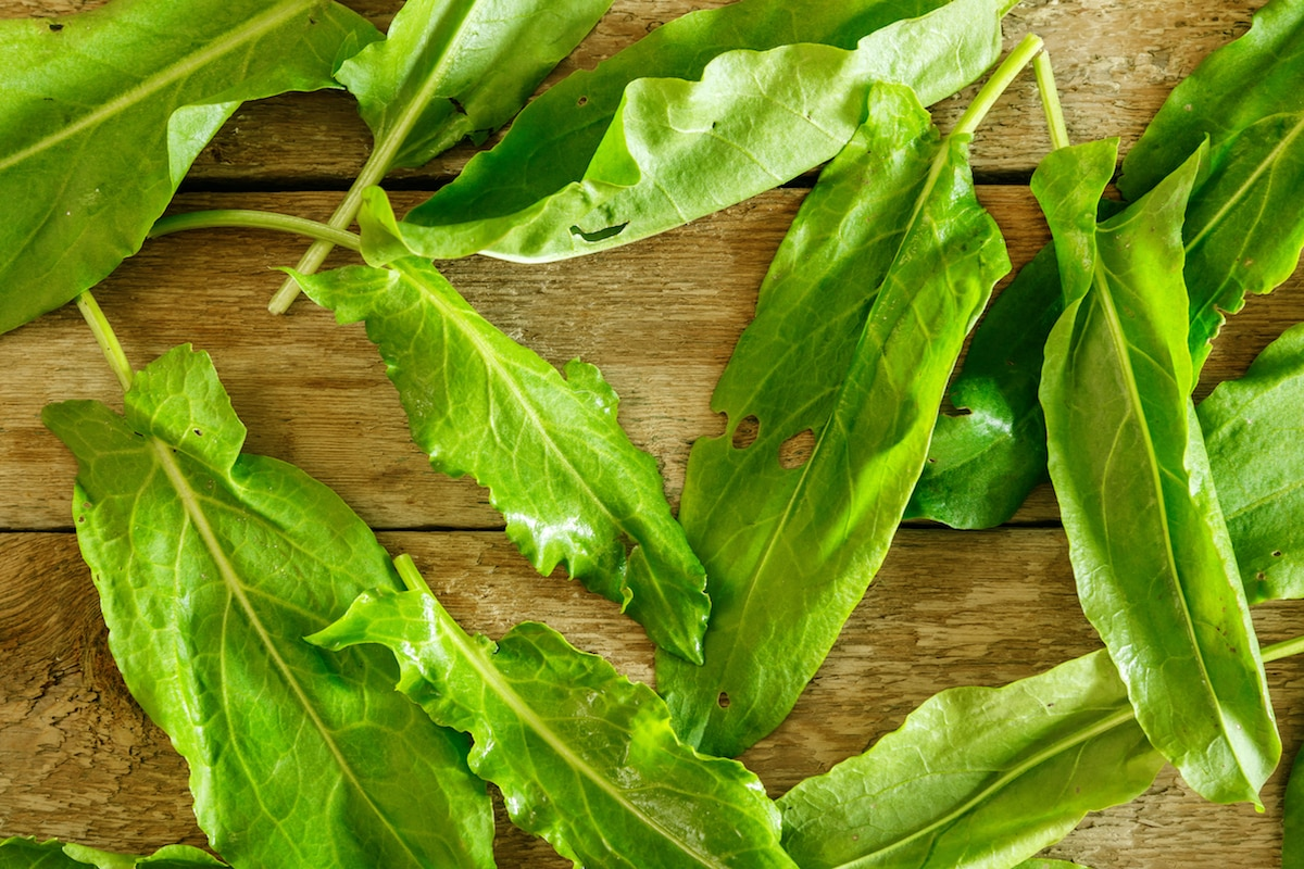 What's A Good Sorrel Substitute?