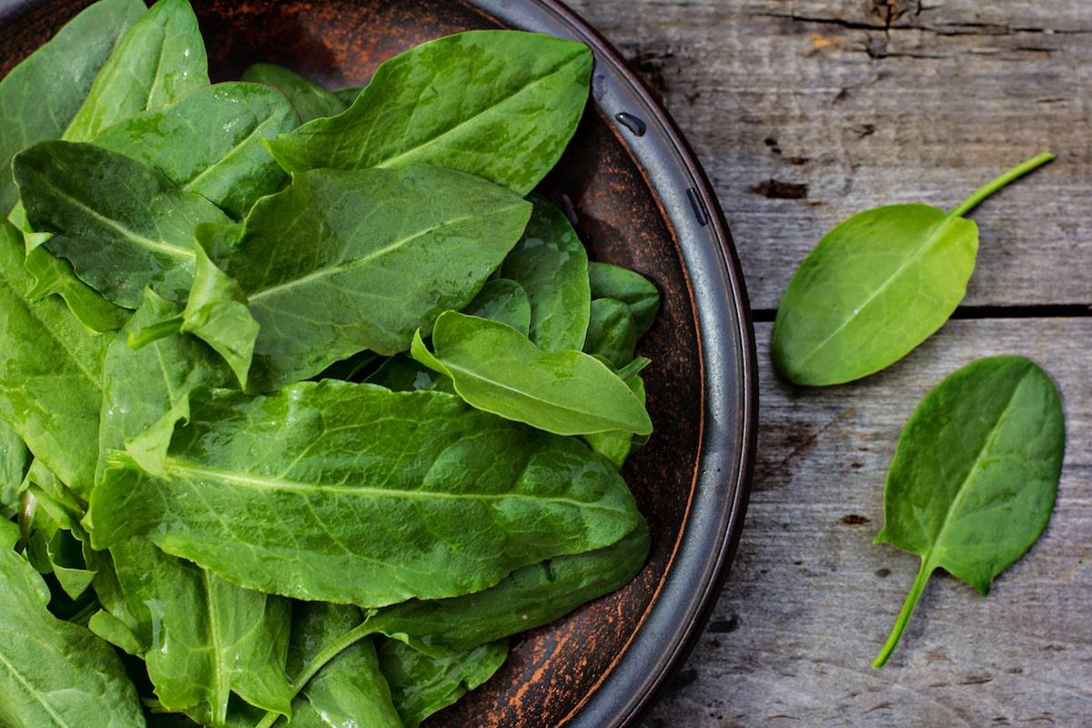 Sorrel: The Sour Herb