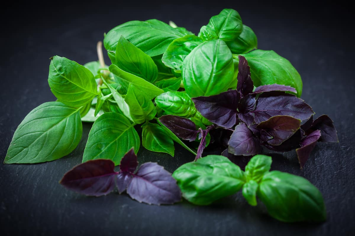How To Store Basil For The Freshest Flavor