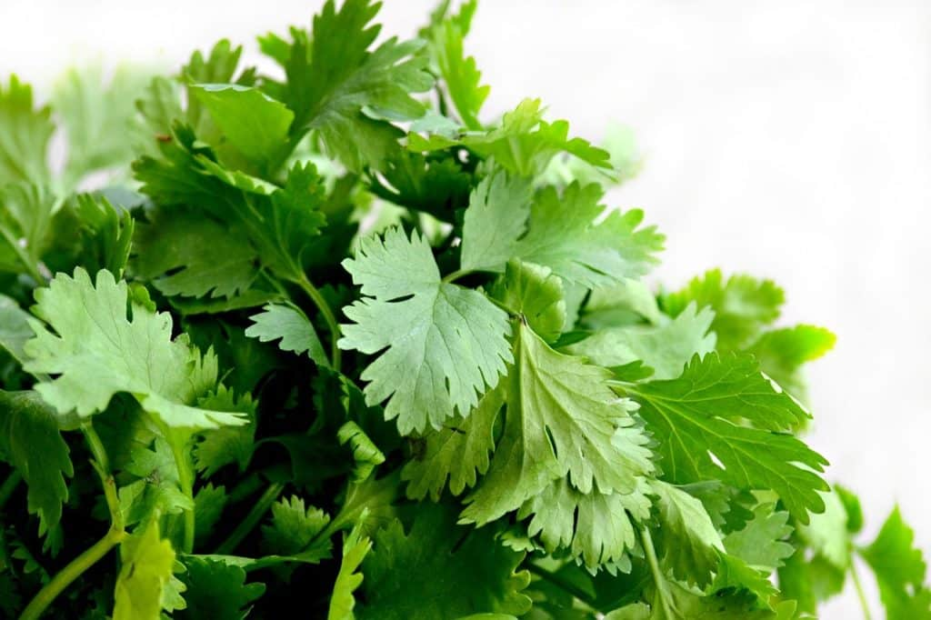 how to store cilantro