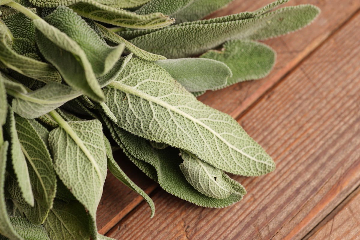 Used Too Much Sage? Here Are Some Solutions