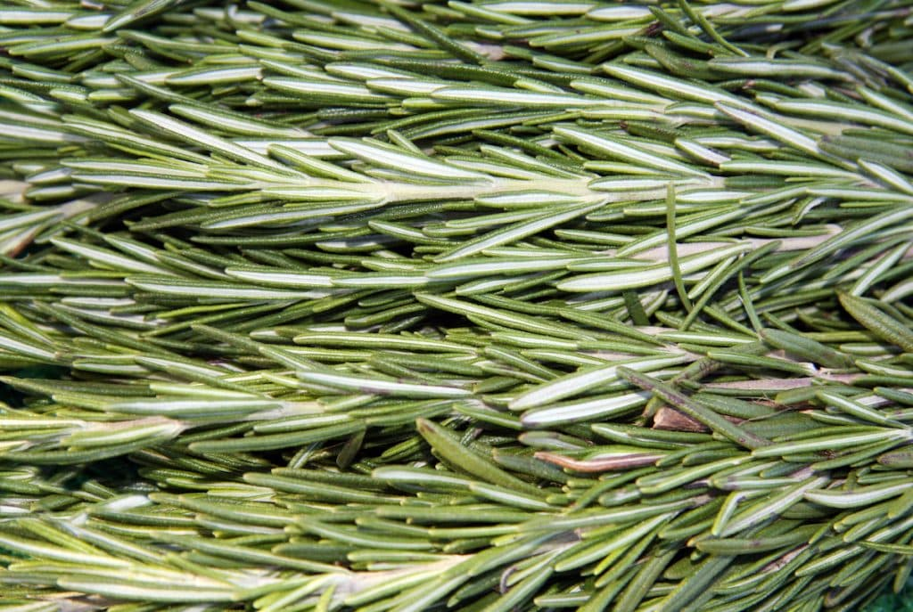 cooking with rosemary