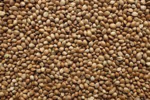 Hemp Seeds: The Unfairly Maligned Superfood