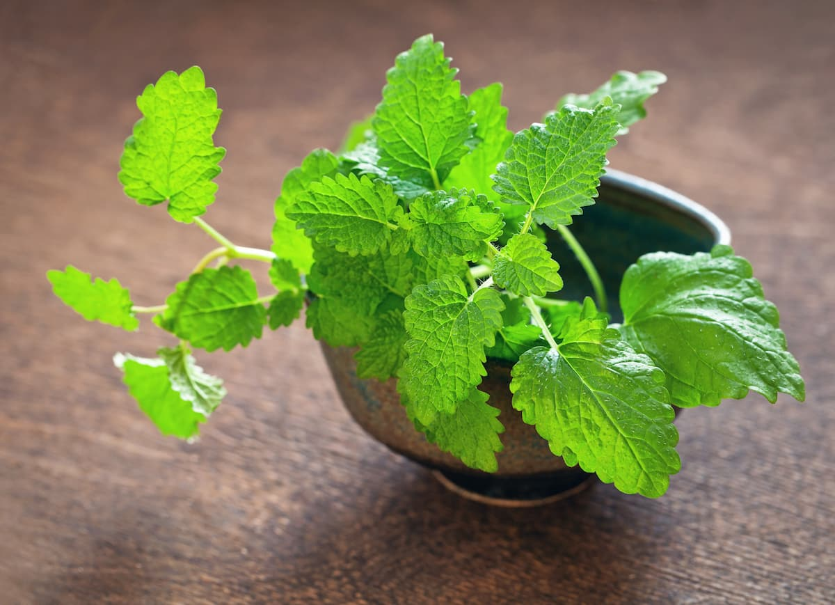 lemon balm substitute