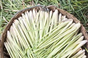Lemon Verbena Vs. Lemongrass: SPICEography Showdown