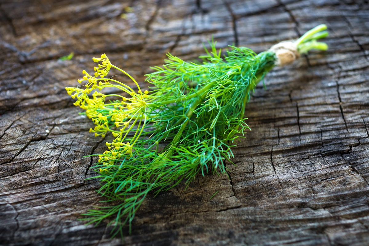 Cooking With Dill: The Dos And Don'ts