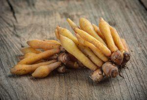 Fingerroot: The Medicinal Ginger