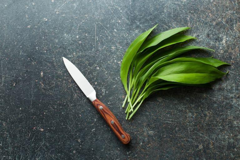 Wild Garlic - Ramsons