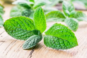 Apple Mint: The Fruity Mint