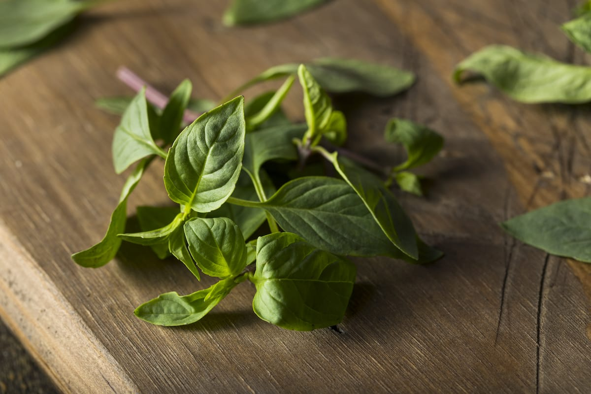 Thai Basil Vs. Holy Basil: SPICEography Showdown