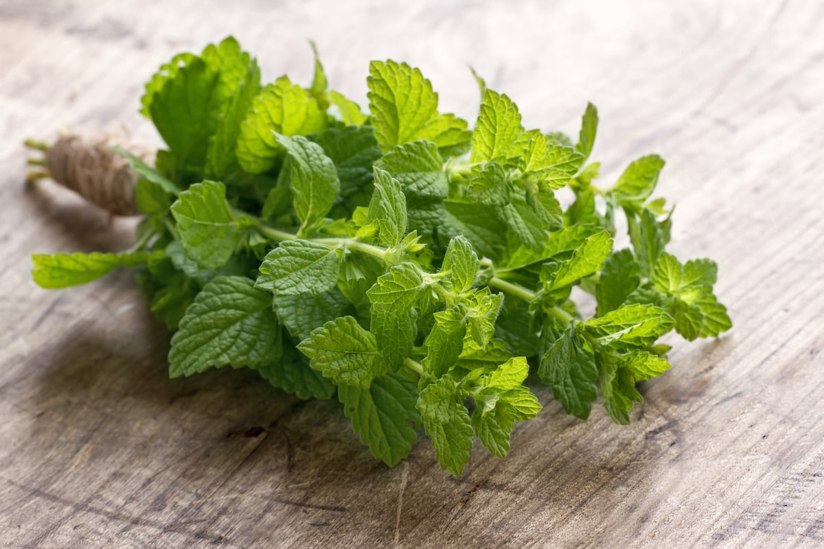 Cooking With Mint: The Dos And Don'ts
