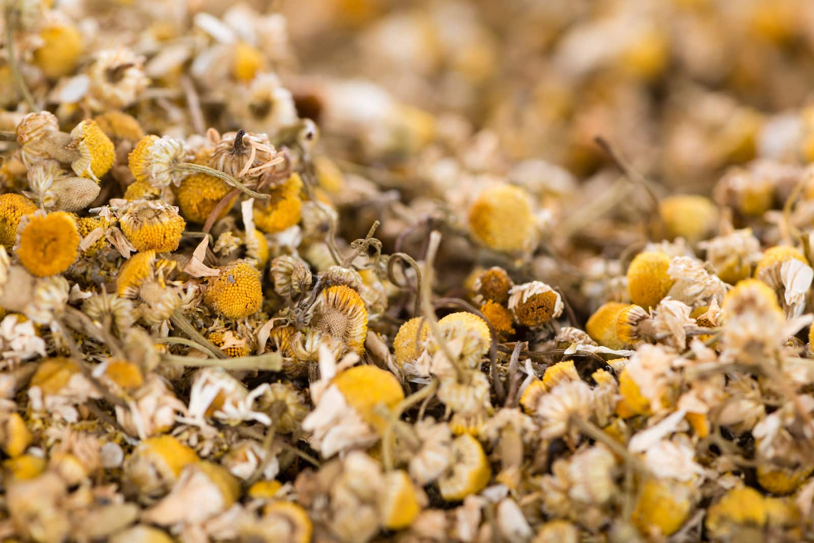 Chamomile Vs. Feverfew: SPICEography Showdown