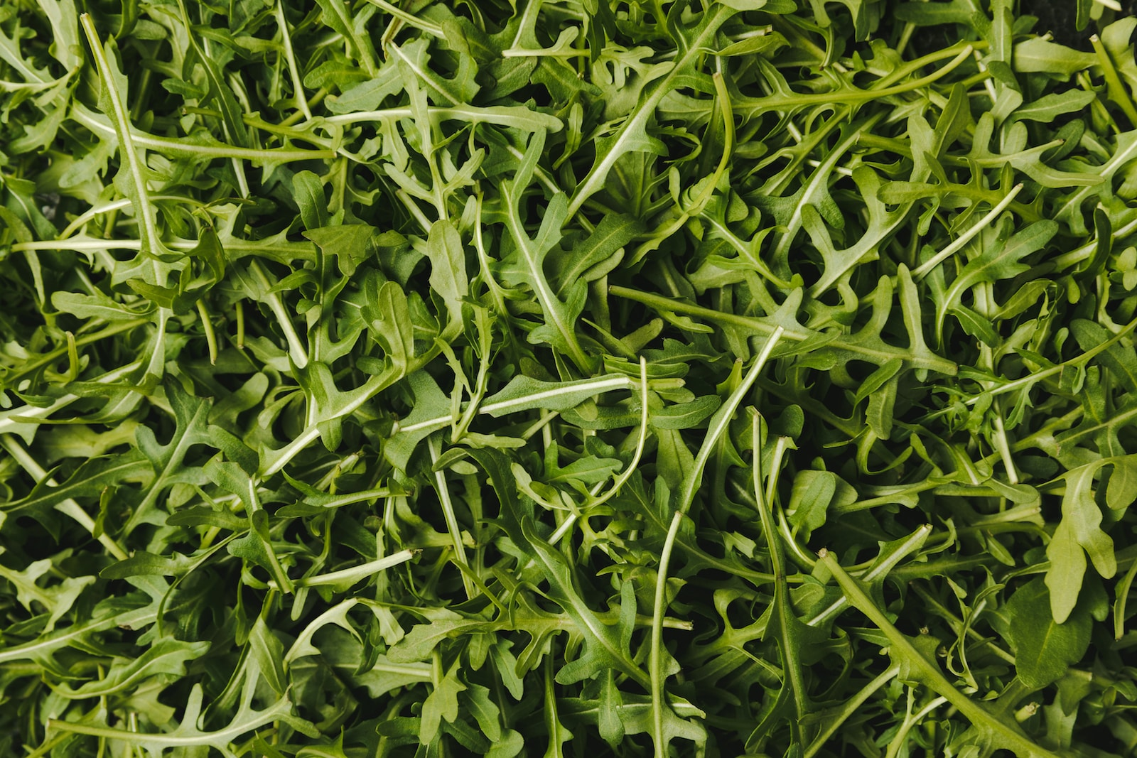What's A Good Arugula Substitute?