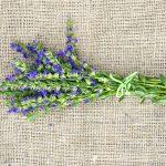 Hyssop vs Lavender