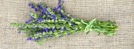 Hyssop vs. Lavender: SPICEography Showdown
