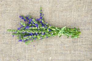 Hyssop vs. Lavender: SPICEography Showdown