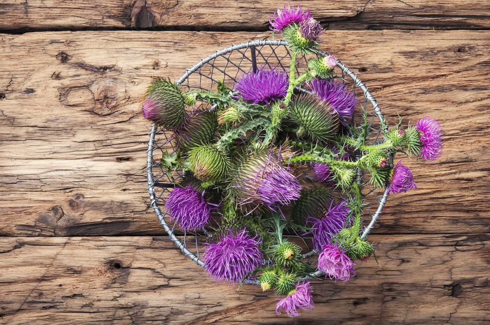 What's A Good Milk Thistle Substitute?