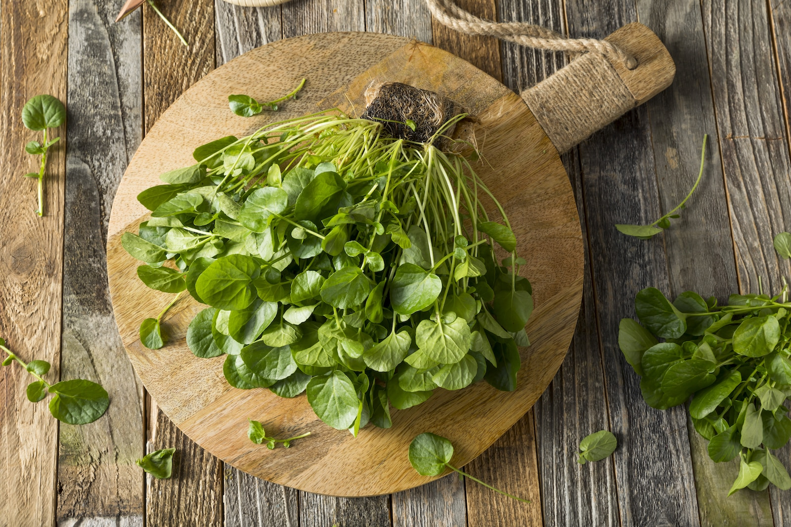 Watercress: The Original Leafy Green