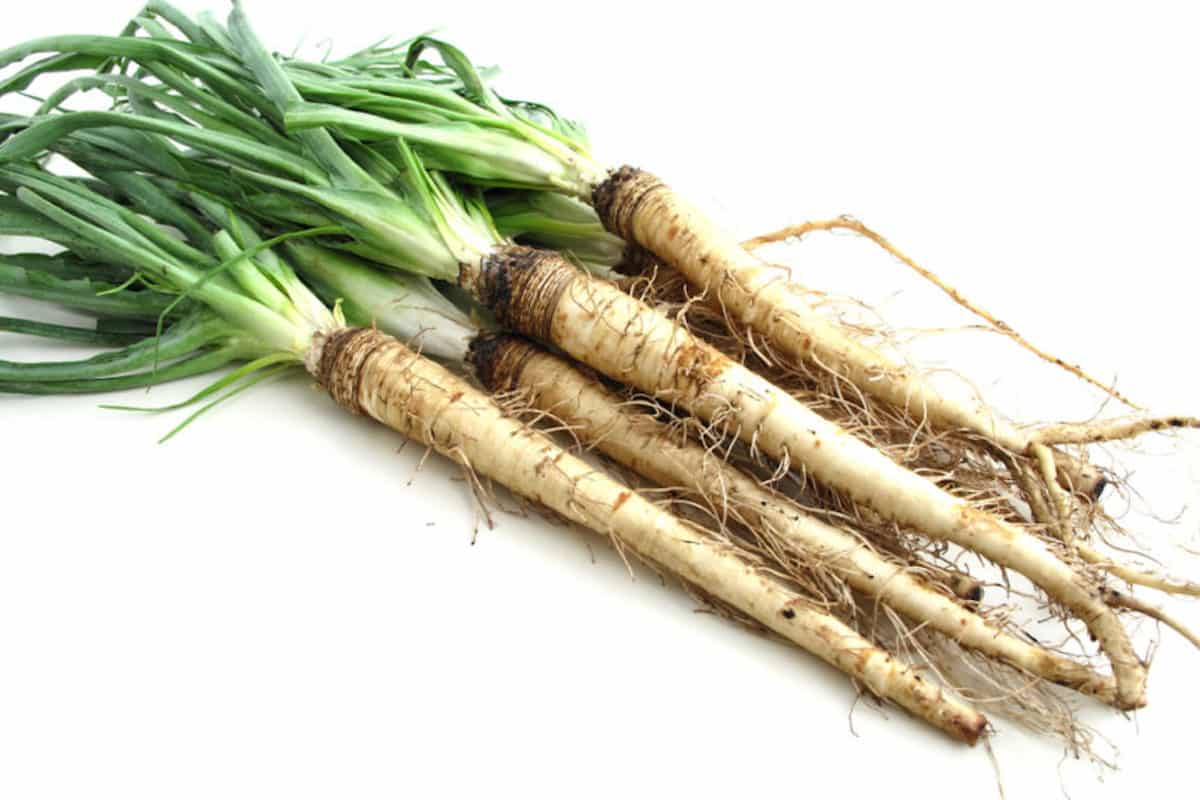Salsify: A Forgotten Root Vegetable