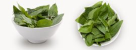 Cinnamon Basil vs Thai Basil