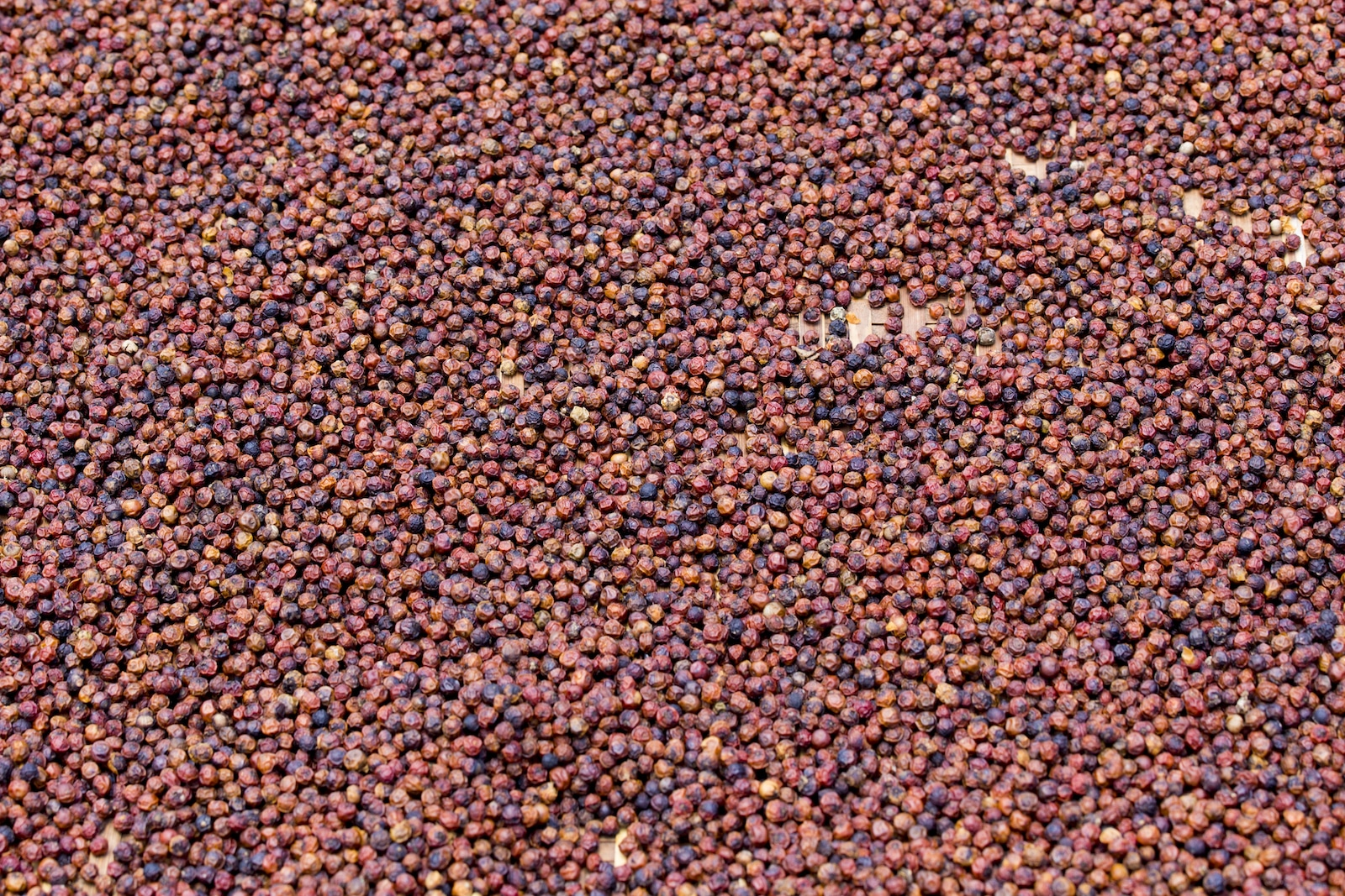 Kampot Pepper: The World's Best Black Pepper