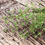 English Thyme Vs. French Thyme