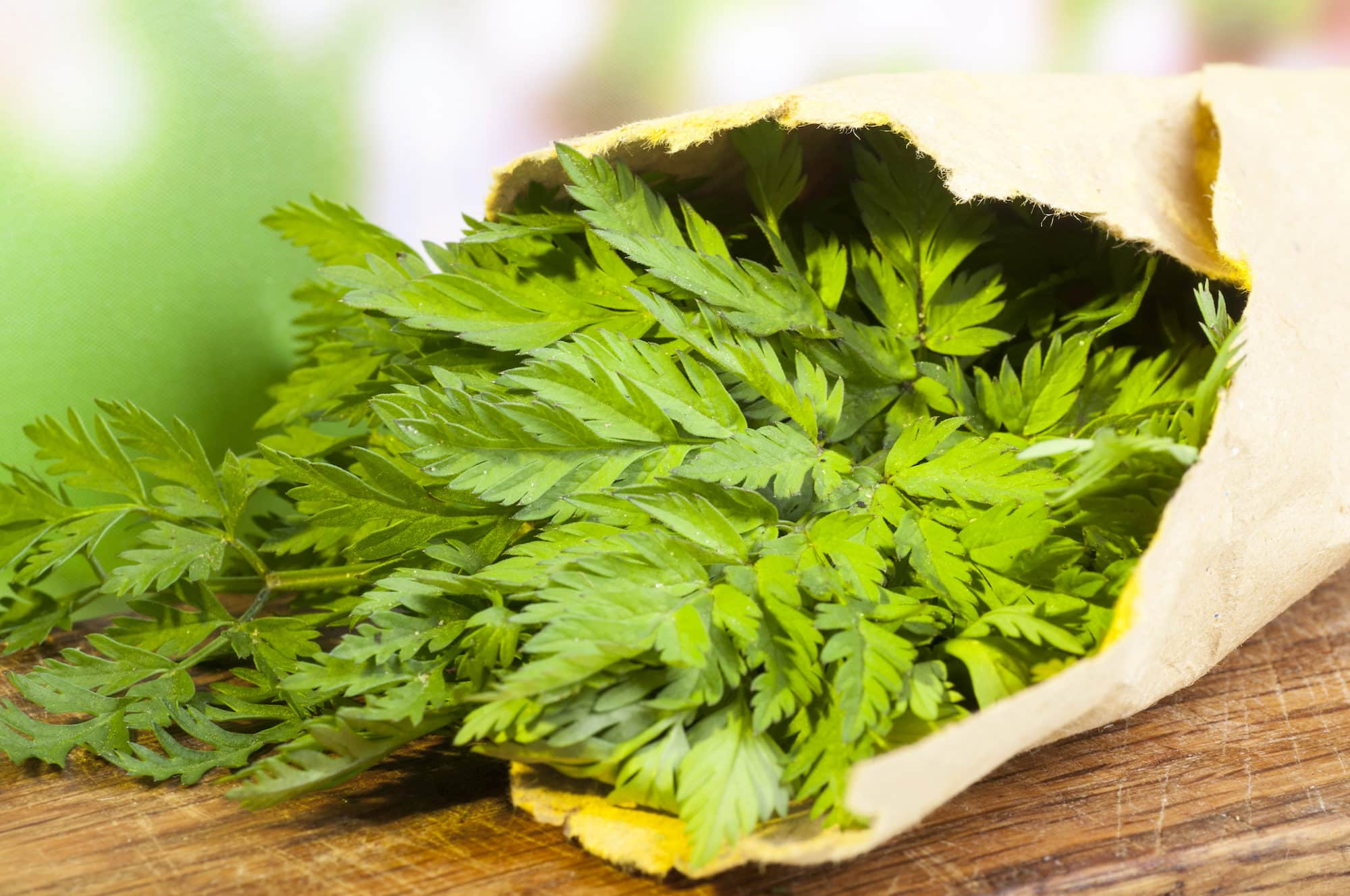 10 Classic European Chervil Uses