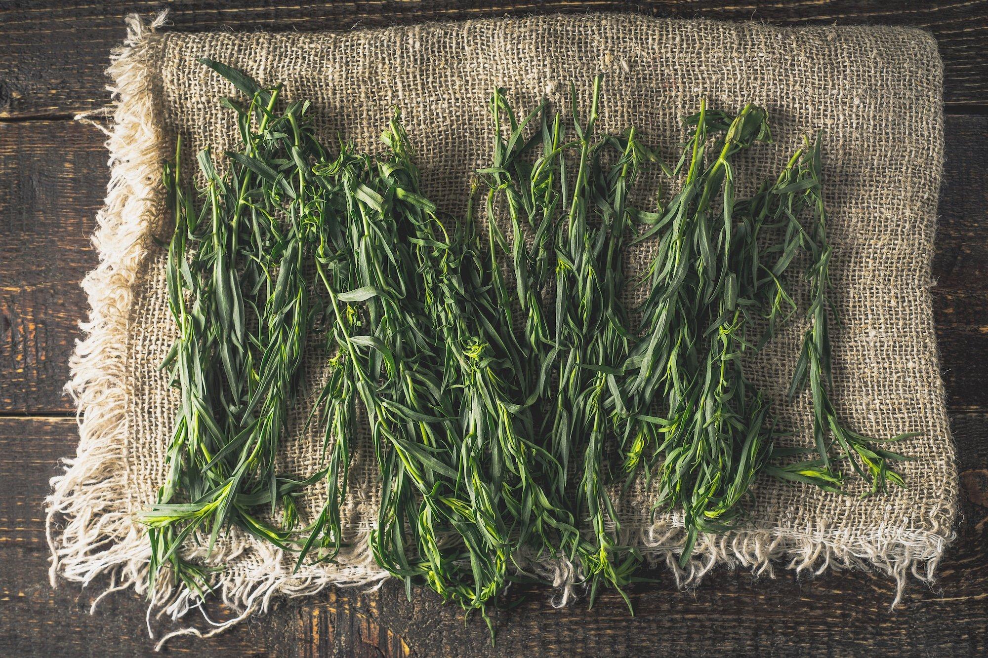 Tarragon vs Rosemary