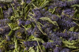 Cooking with hyssop