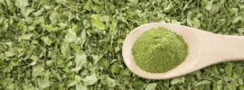 Cooking with moringa