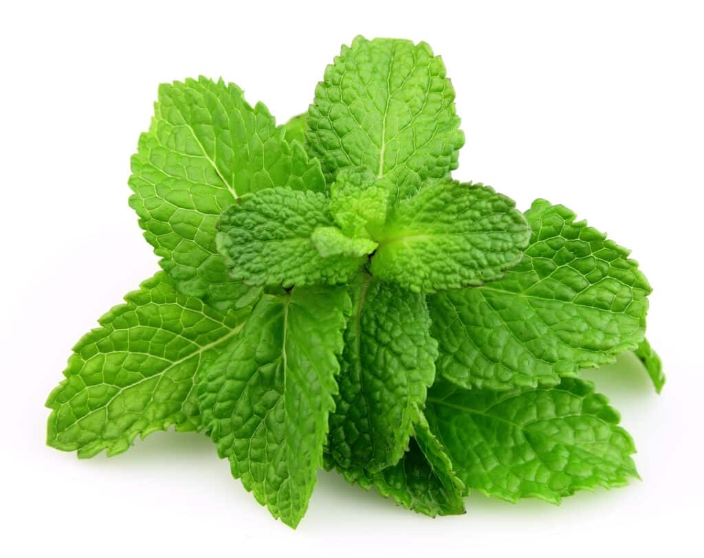 Cooking with orange mint