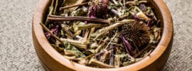 Echinacea Root Vs. Leaf
