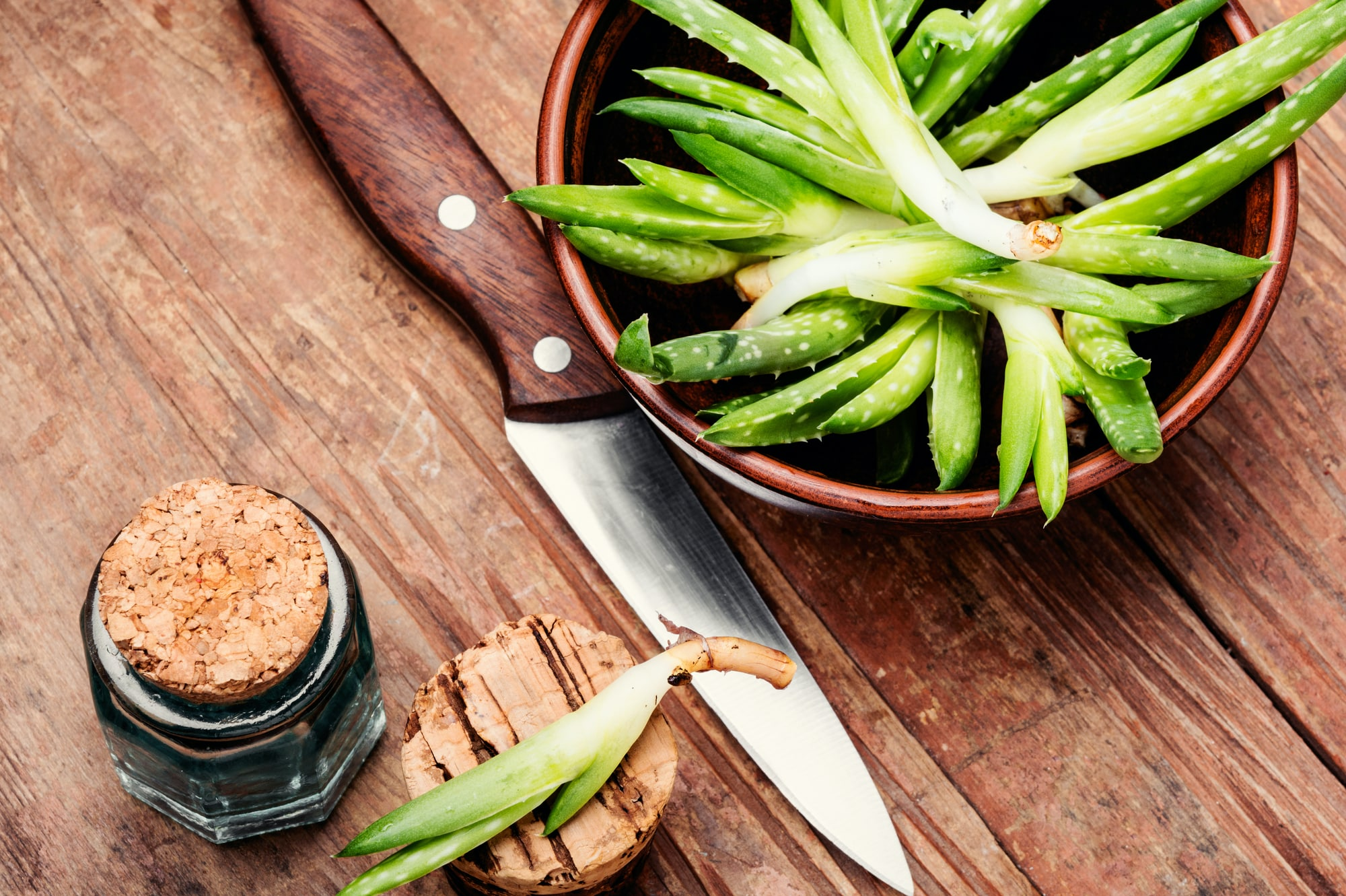 Cooking with Aloe Vera