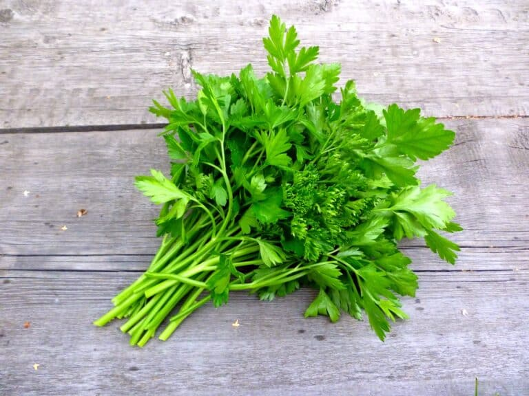 Can you freeze parsley?