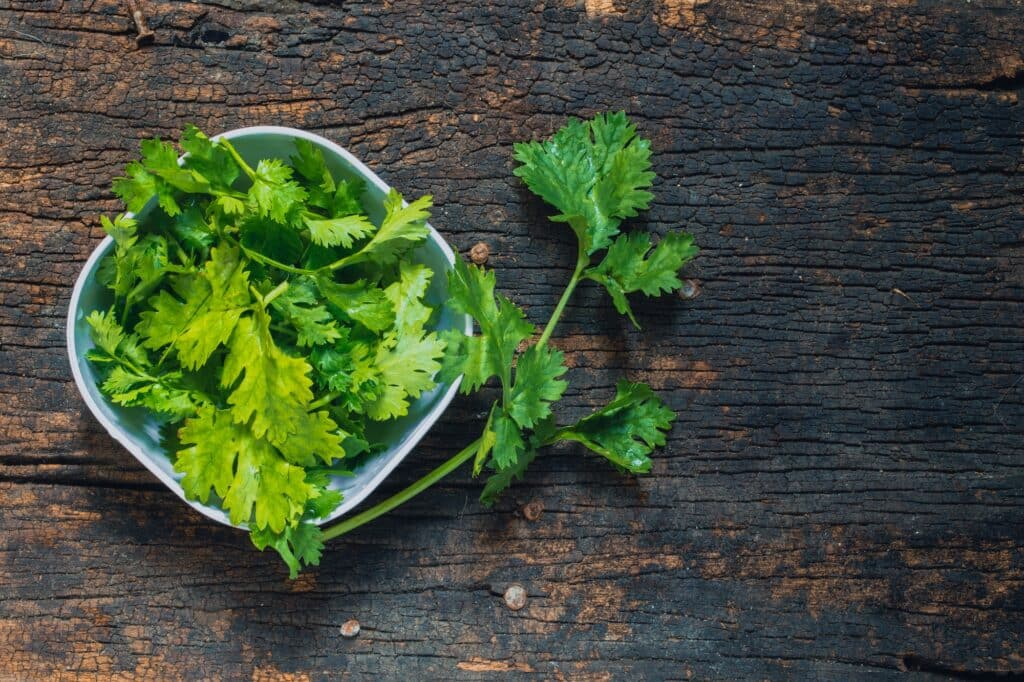 How to dry cilantro